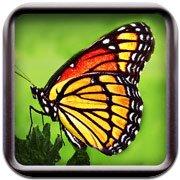 Обложка Butterflies!