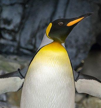 Играем на Linux