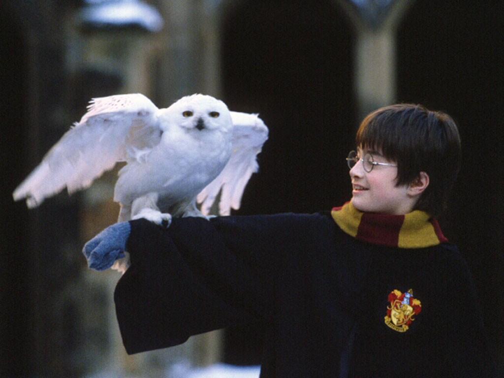 Все фильмы про Гарри Поттера - список частей по порядку, топ лучшего кино про Гарри Поттера | Канобу - Изображение 1