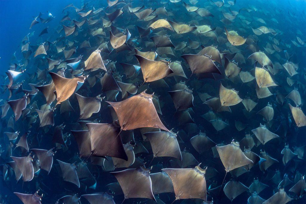 30 завораживающих фотографий подводного мира   Канобу - Изображение 0