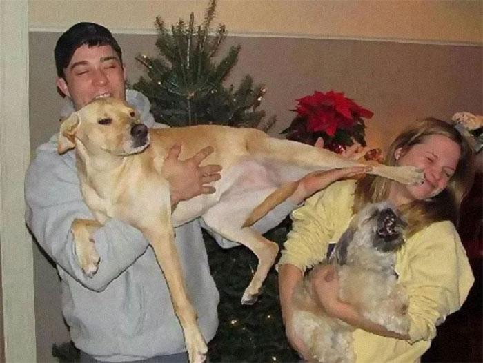 Галерея дурацких рождественских фотографий, которые испортили собаки | Канобу - Изображение 5910