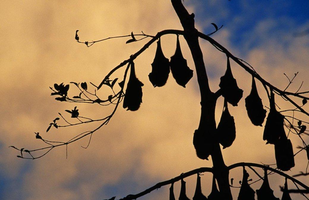 Хэллоуин еще некончился: лучшие фотографии летучих мышей отNatGeo | Канобу - Изображение 4693
