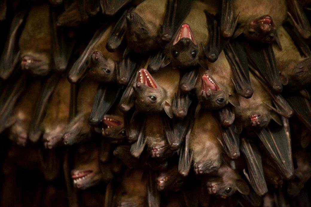 Хэллоуин еще некончился: лучшие фотографии летучих мышей отNatGeo | Канобу - Изображение 4686