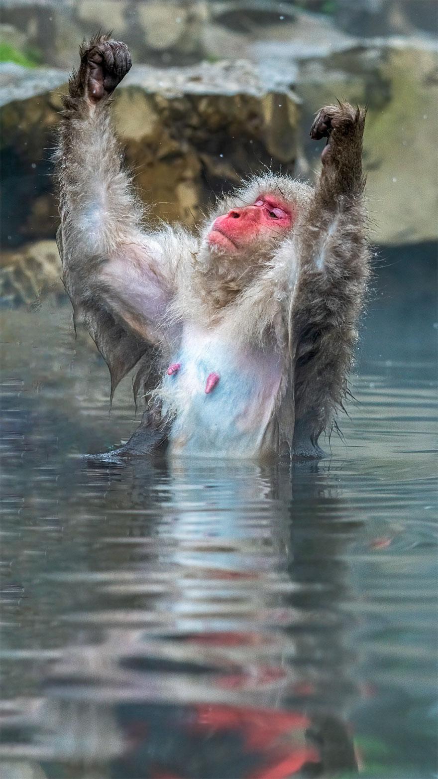 Позитивная галерея: 40 фото сконкурса насамый смешной снимок дикой природы   Канобу - Изображение 3996